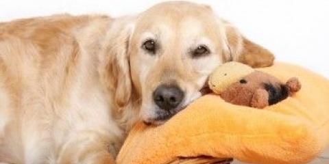 Як визначити вагітність собаки на ранніх термінах